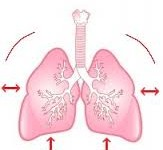 respiratory-rate.jpg